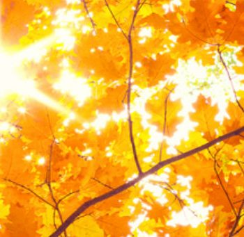 hypnotherapy-beat-autumn-blues